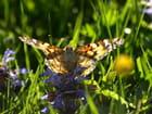 Papillon - jean pierre Canal