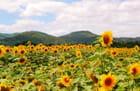 A la place du soleil -