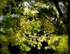 Lumière d'automne - Mariette PROVENCHER