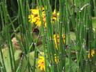 Jolie haie de fleurs - Patrice PLANTUREUX