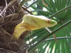Fleur de Palmier, prête à s\'ouvrir .... -