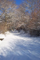 Chemin neigeux - Maryse ROZEROT