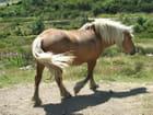 cheval de Lozére - Huguette Roman