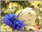 bleu et blanc - Jean paul CANO