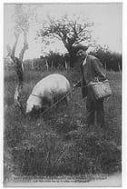 La récolte de la truffe - Yves MARCHAND