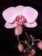 Fleur ou papillon ? - Philippe DRAGHICI