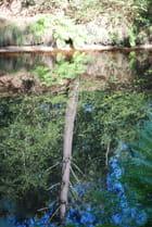 les reflets dans l'eau du canal - Genevieve LAPOUX