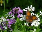 Amaryllis et abeille sur fleurs champêtres - Malou TROEL
