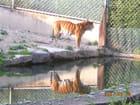 Tigre... de Lyon ! par Danielle Gadoni sur L'Internaute