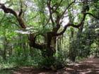 Vieille arbre par Jean-Daniel David sur L'Internaute