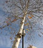 Fruits et feuilles d'hiver - Jean PISANTé