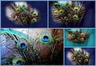 Les plumes du paon - Pierre LAVILLE