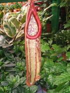 Plante carnivore - Jeanne FERY