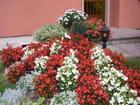 Rocaille fleurie par christiane DOLLE sur L'Internaute