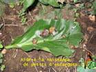Naissance d'escargots... par Marie LAFAY sur L'Internaute