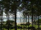 La baie d'Arcachon à travers les pins - NATHALIE HESME
