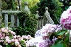 Escalier vieille pierre hortensias - Brigitte SINDING