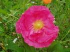jolie fleur par christelle milesi sur L'Internaute