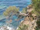 Un arbre amoureux de la mer - Marie-Christine Legot