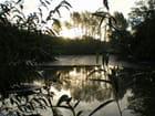 Soleil levant sur étang vidé - François GROS