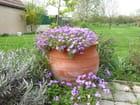 Poterie en fleur - charline pipart