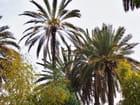 """Marrakech """"La perle du Sud"""" - simone roussel"""