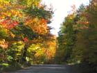 Promenade d'automne - Marie Laurier
