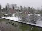 Un froid de canard -