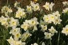 C'est le printemps - Michèle CASSE
