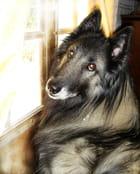 Lyck, notre amour de chien... - Christian AYMÉ