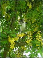 Chat puni qui se sauve - Ginette Lebouteiller