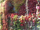 Couleurs d automne - Patrice PLANTUREUX