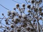 Arbuste enneigé par Jeanne FERY sur L'Internaute