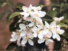 Fleurs de pommiers - philippe fasquelle