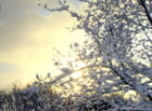 Soleil sur neige - Annie Van Gijseghem
