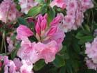 Les fleurs de mai - Patrice PLANTUREUX