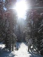Soleil et neige par Jean paul FOLLETTI sur L'Internaute