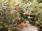 Allée du jardin par anne marie magnen-fleury sur L'Internaute