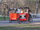 Vélo taxi central park new york par serge piguet sur L'Internaute