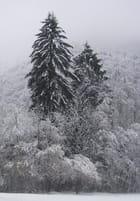 Manteau d'hiver - Claudia MEYER