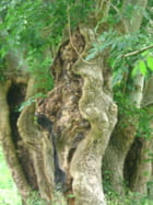 L'arbre au profil - gaelle Houle-marchand