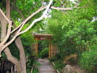 Jardin Japonais (2) - Jean-pierre MARRO