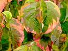 Couleurs d'automne - odette lefebvre