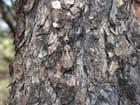 Accouplement de cigales par raymond mingaud sur L'Internaute