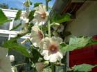 fleur allant ...au ciel.!! - Mauricette BERAUD