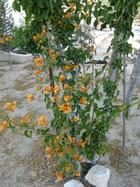 Le réveil du bougainvillier orange 2 par Dominique BRAHMI sur L'Internaute