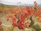 Vignes à l'automne par LUCETTE LAGESTE sur L'Internaute