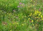 Flore alpine - Josette GRINAND
