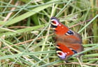 Papillon - brigitte leroi