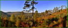 Douceur d'automne - jean-pascal girardin